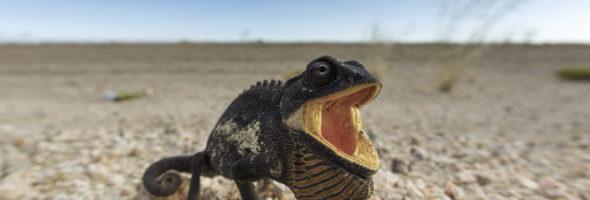 La thermorégulation ou pourquoi nous ne sommes pas des lézards